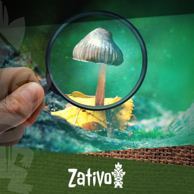 Guida Semplice Per Identificare I Funghi Magici Comuni