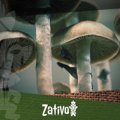 Come Utilizzare i Tartufi o Funghi Allucinogeni