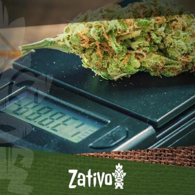 Come Microdosare La Cannabis